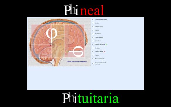 phineal-phituitaria