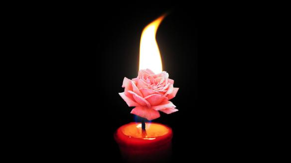 Rosa_de_la_luz_la_que_alumbra_los_corazones_la_Santa_vida_Ofrendada_en_cada_ser_el_destino_de_todos_la_luz_de_la_vida_Amor